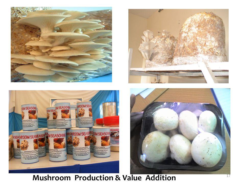 Mushroom Production & Value Addition