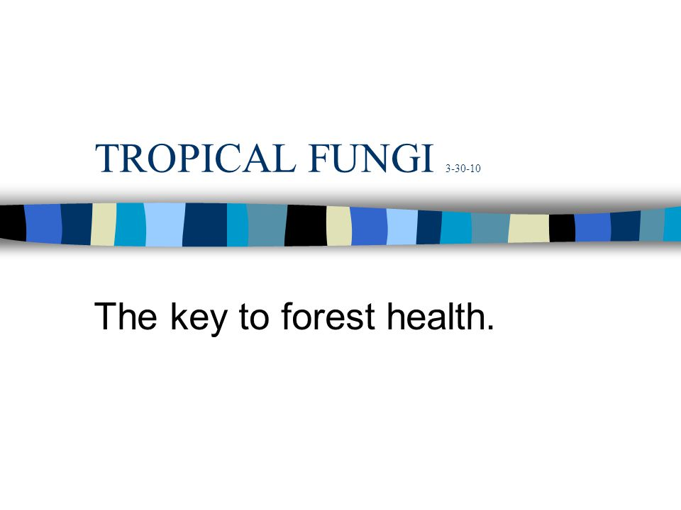 The key to forest health.