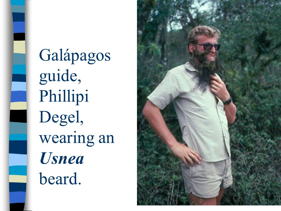 Galápagos guide, Phillipi Degel, wearing an Usnea beard.