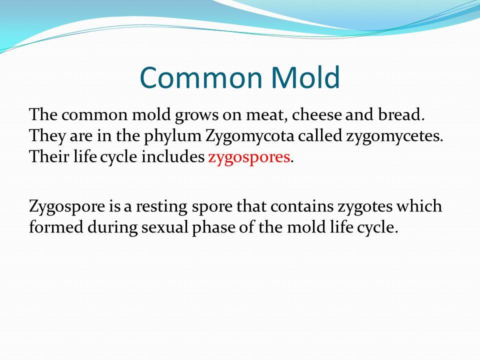 Common Mold