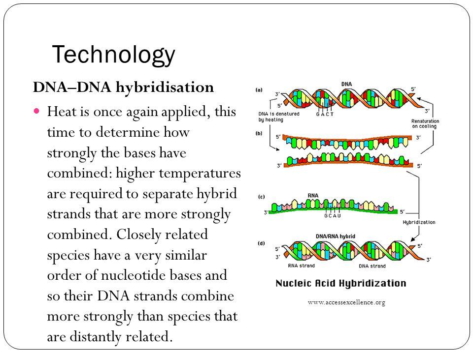 Technology DNA–DNA hybridisation