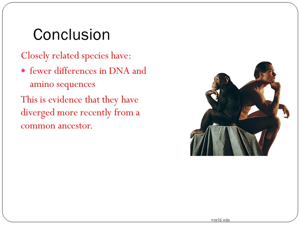 Conclusion Closely related species have: