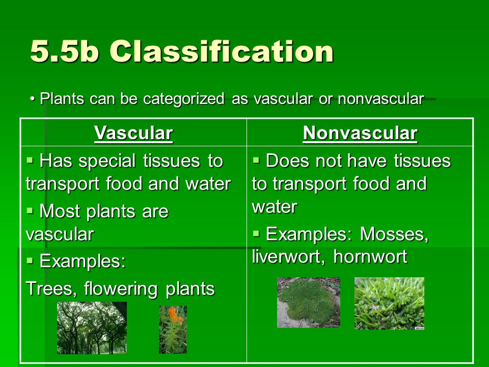 5.5b Classification Vascular Nonvascular
