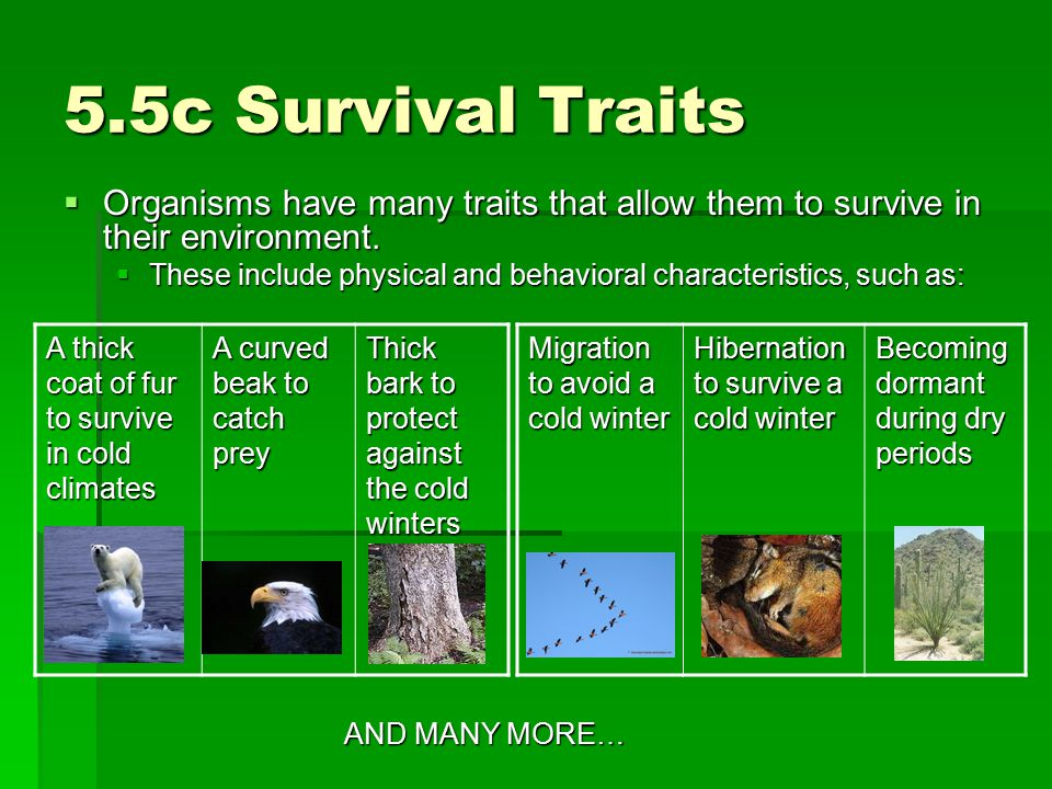 5.5c Survival Traits Organisms have many traits that allow them to survive in their environment.