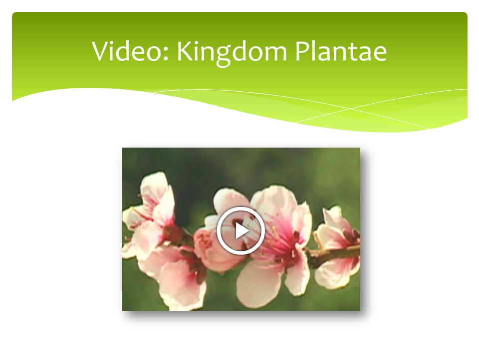 Video: Kingdom Plantae
