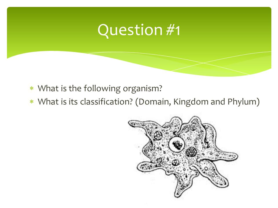 Question #1 What is the following organism