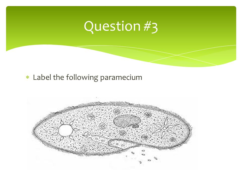 Question #3 Label the following paramecium