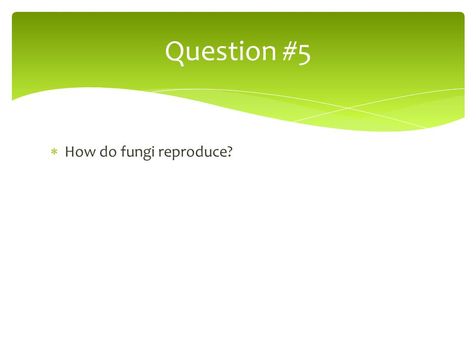 Question #5 How do fungi reproduce