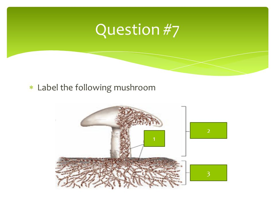 Question #7 Label the following mushroom 2 1 3
