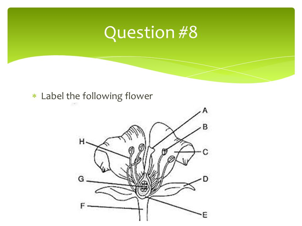 Question #8 Label the following flower