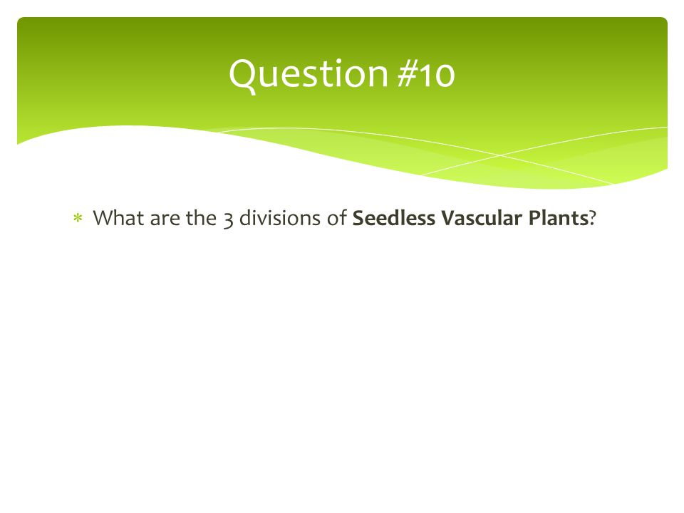 Question #10 What are the 3 divisions of Seedless Vascular Plants