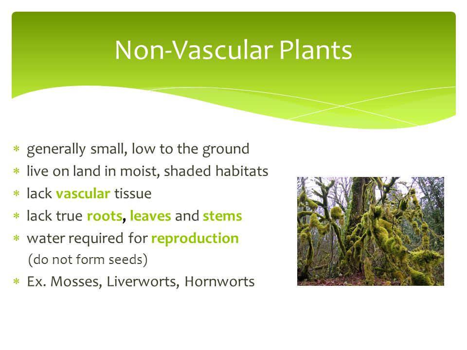 Non-Vascular Plants generally small, low to the ground