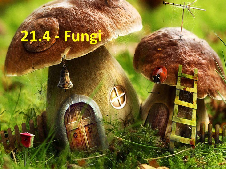 21.4 - Fungi