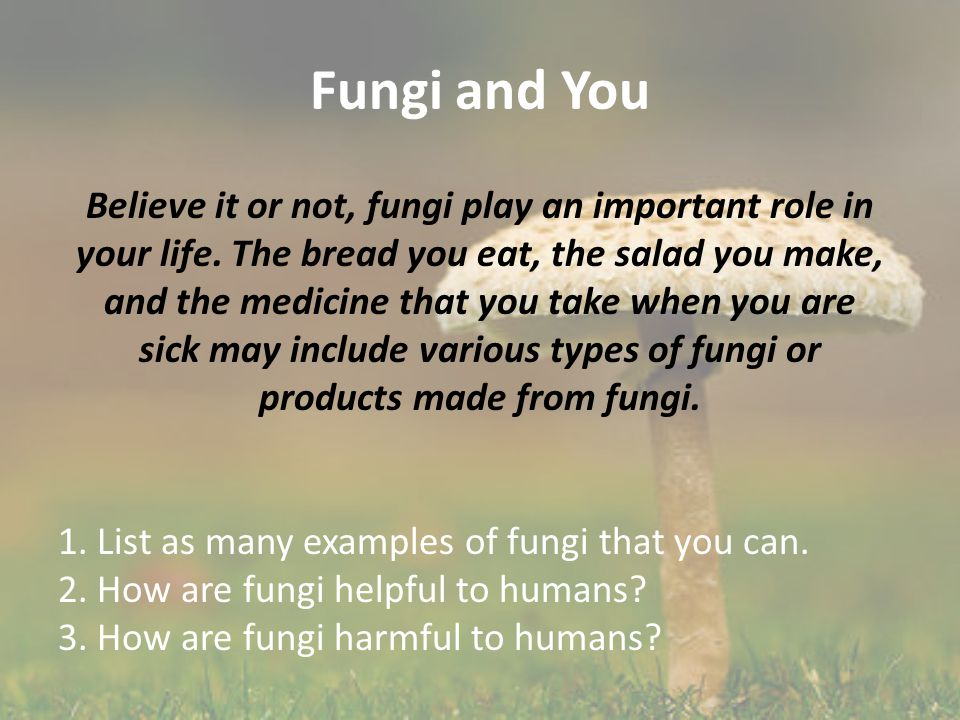 Fungi and You Believe it or not, fungi play an important role in