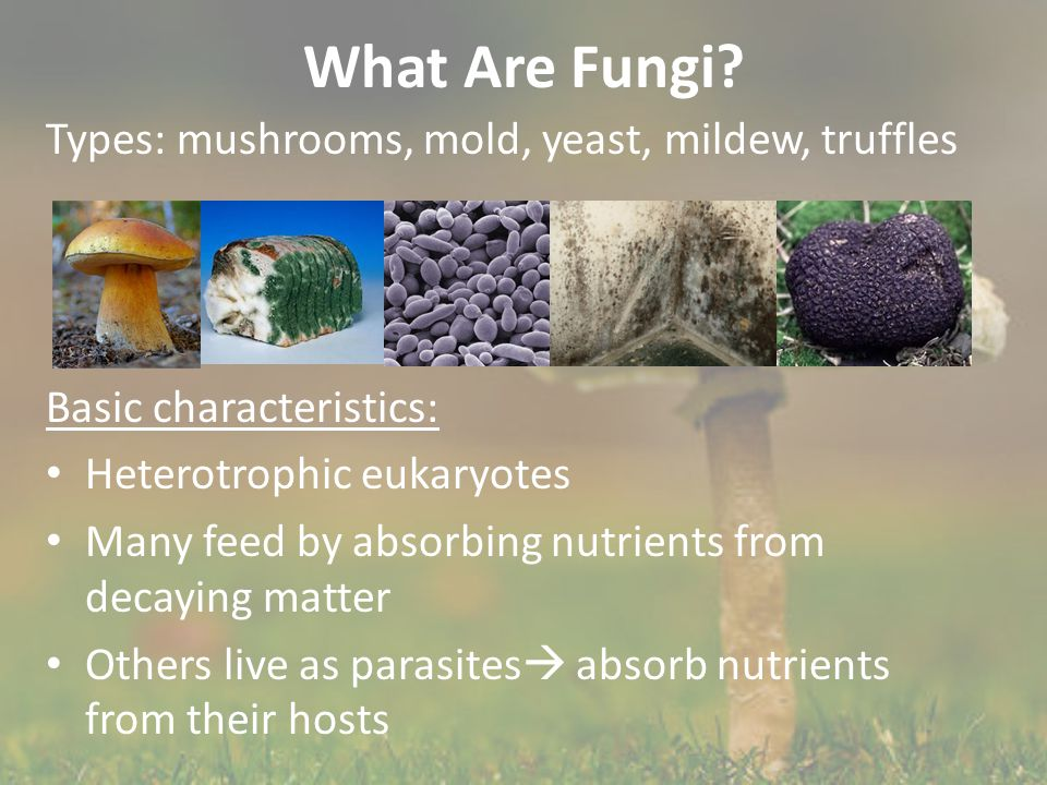What Are Fungi Types: mushrooms, mold, yeast, mildew, truffles