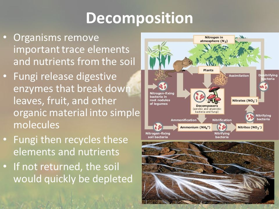Decomposition Organisms remove important trace elements and nutrients from the soil.