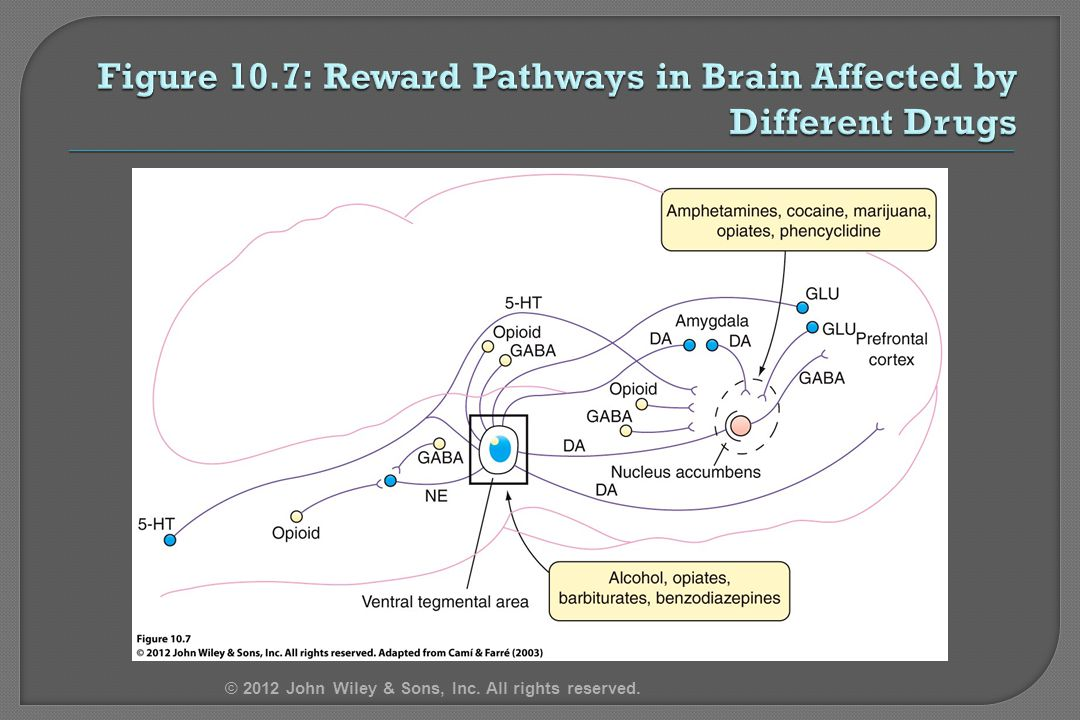 Figure 10.7: Reward Pathways in Brain Affected by Different Drugs