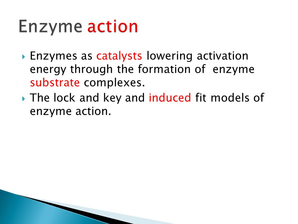 Enzyme action Enzymes as catalysts lowering activation energy through the formation of enzyme substrate complexes.