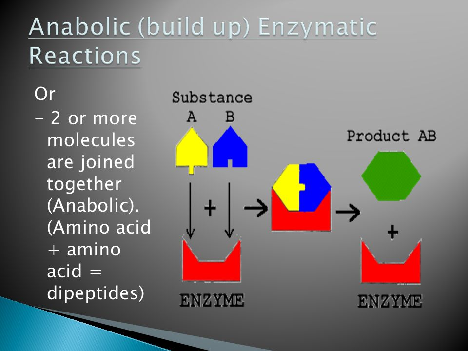 Anabolic (build up) Enzymatic Reactions