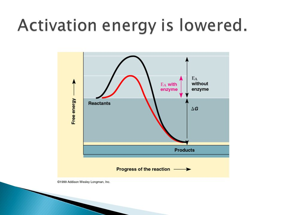 Activation energy is lowered.