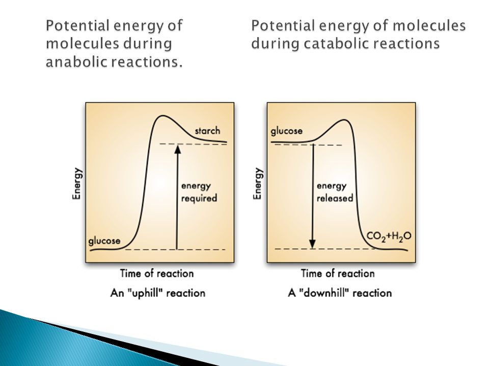Potential energy of. Potential energy of molecules molecules during