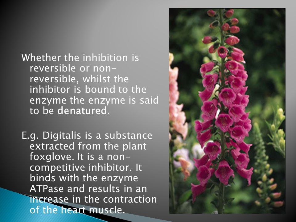 Whether the inhibition is reversible or non- reversible, whilst the inhibitor is bound to the enzyme the enzyme is said to be denatured.