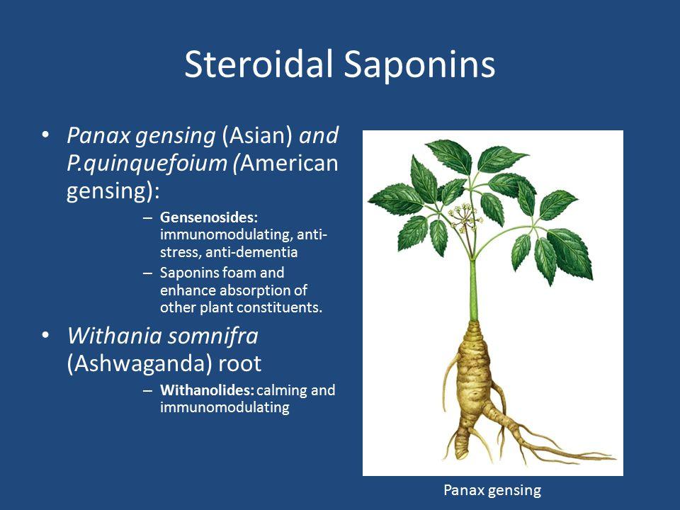 Steroidal Saponins Panax gensing (Asian) and P.quinquefoium (American gensing): Gensenosides: immunomodulating, anti-stress, anti-dementia.