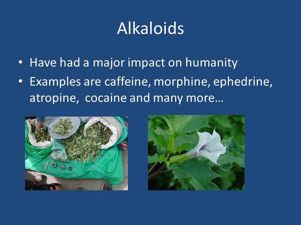 Alkaloids Have had a major impact on humanity