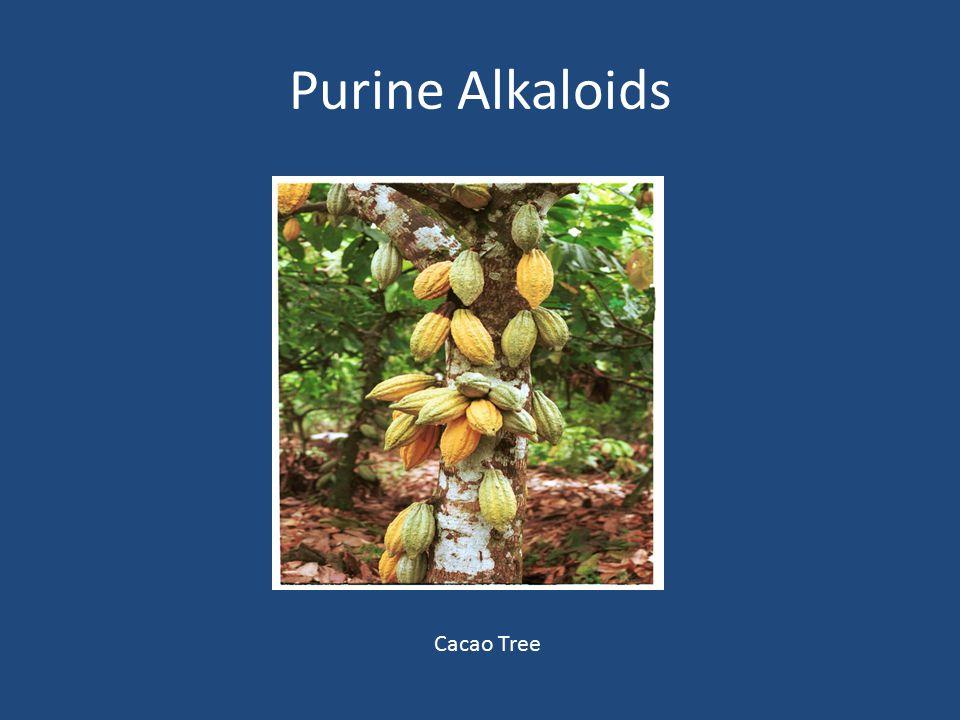 Purine Alkaloids Cacao Tree
