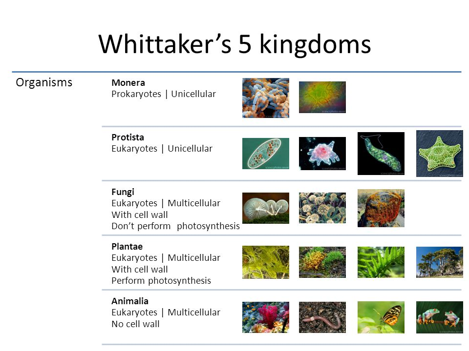 Whittaker's 5 kingdoms Organisms Monera Prokaryotes   Unicellular