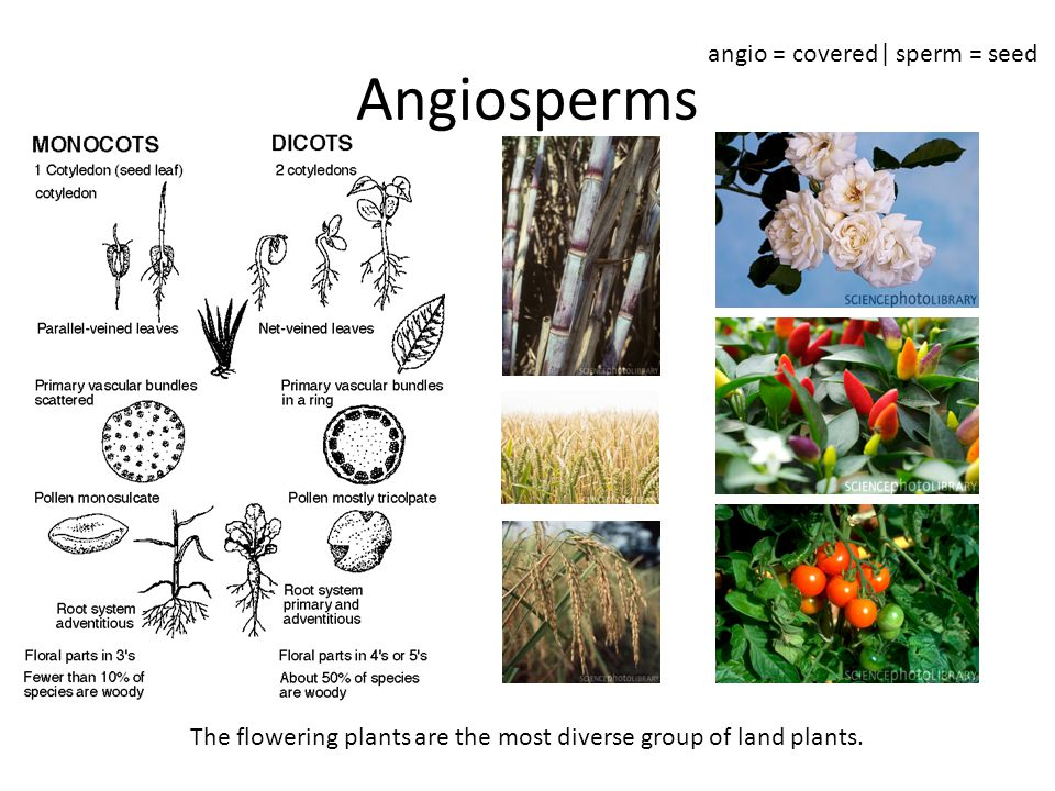 The flowering plants are the most diverse group of land plants.