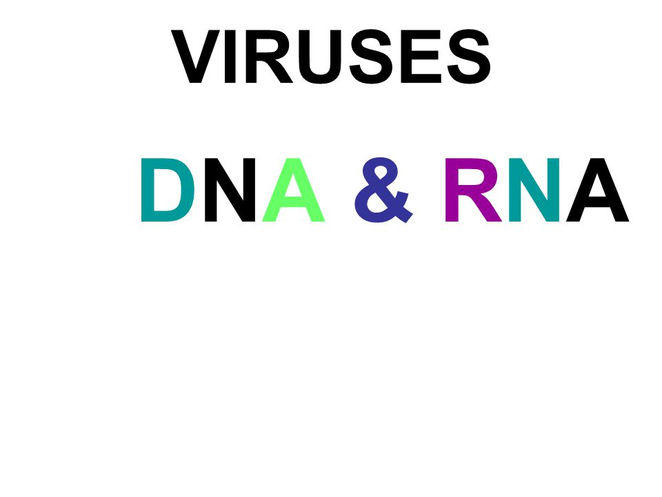 VIRUSES DNA & RNA 18