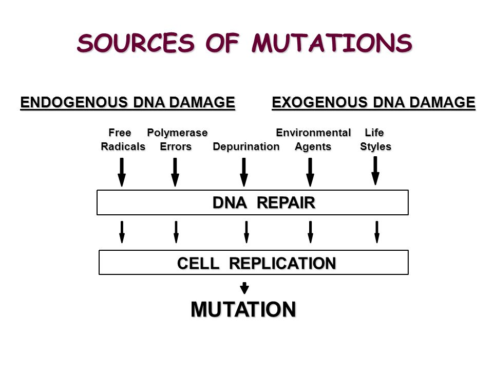 SOURCES OF MUTATIONS MUTATION DNA REPAIR CELL REPLICATION