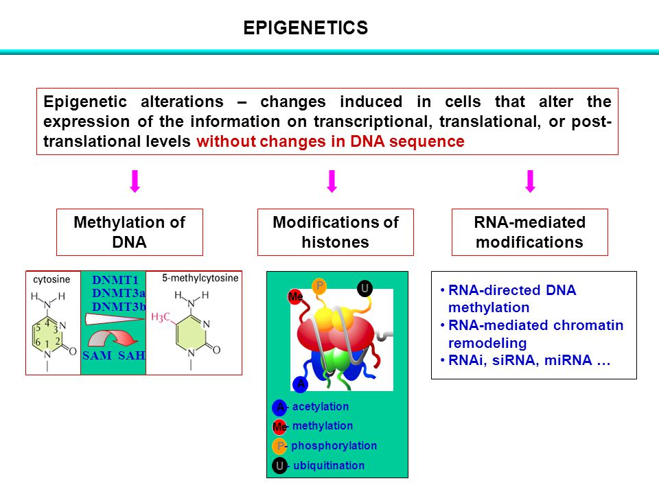 Modifications of histones RNA-mediated modifications
