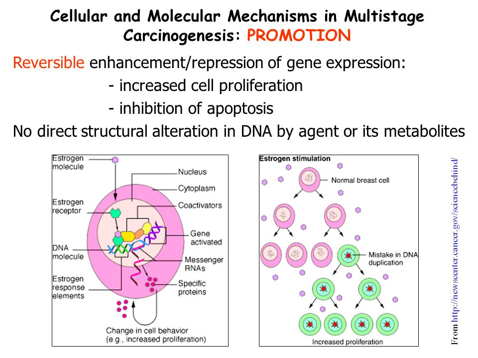 Reversible enhancement/repression of gene expression: