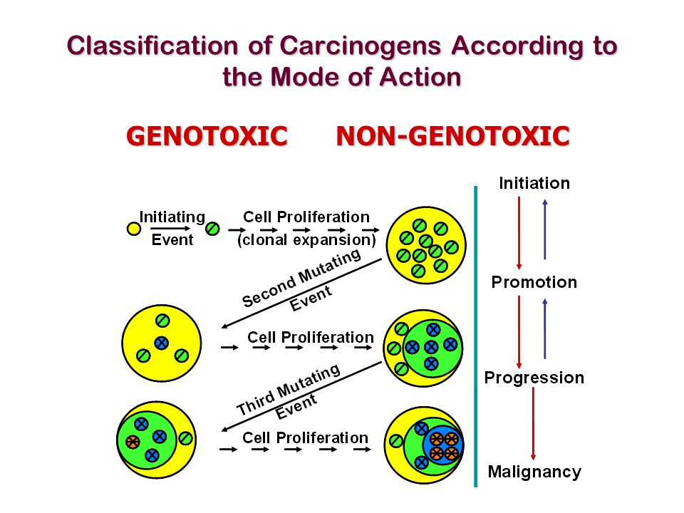 Classification of Carcinogens According to the Mode of Action