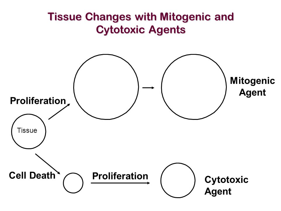 Tissue Changes with Mitogenic and Cytotoxic Agents