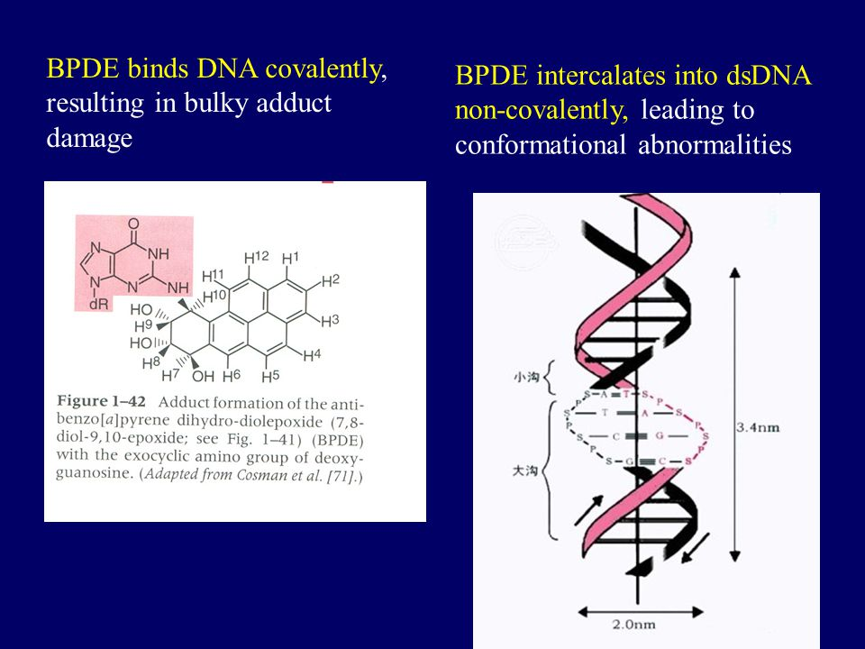 BPDE binds DNA covalently, resulting in bulky adduct damage