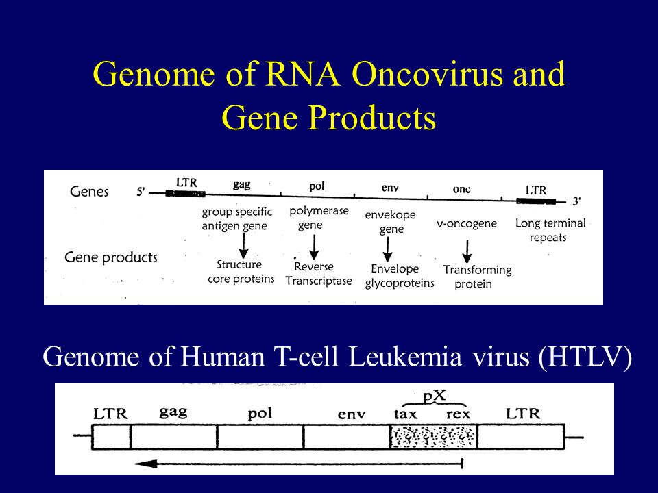 Genome of RNA Oncovirus and Gene Products
