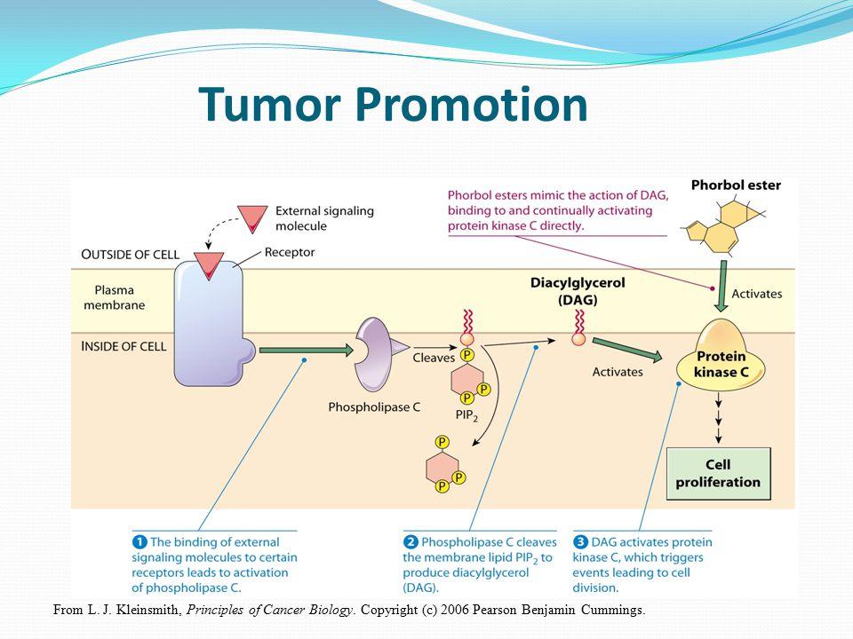 Tumor Promotion