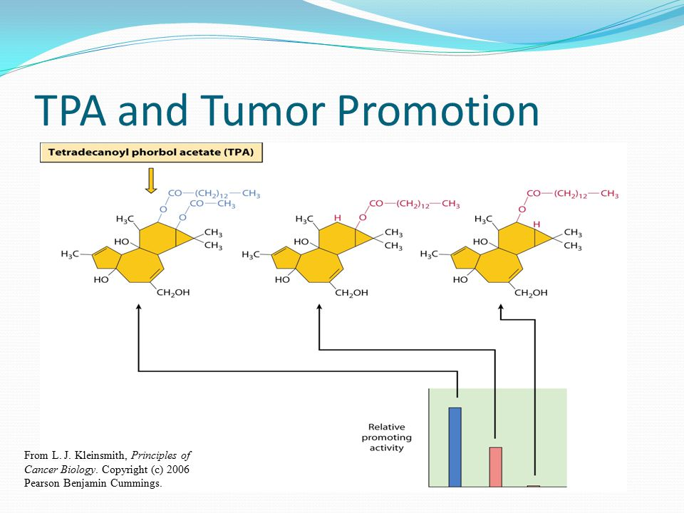 TPA and Tumor Promotion
