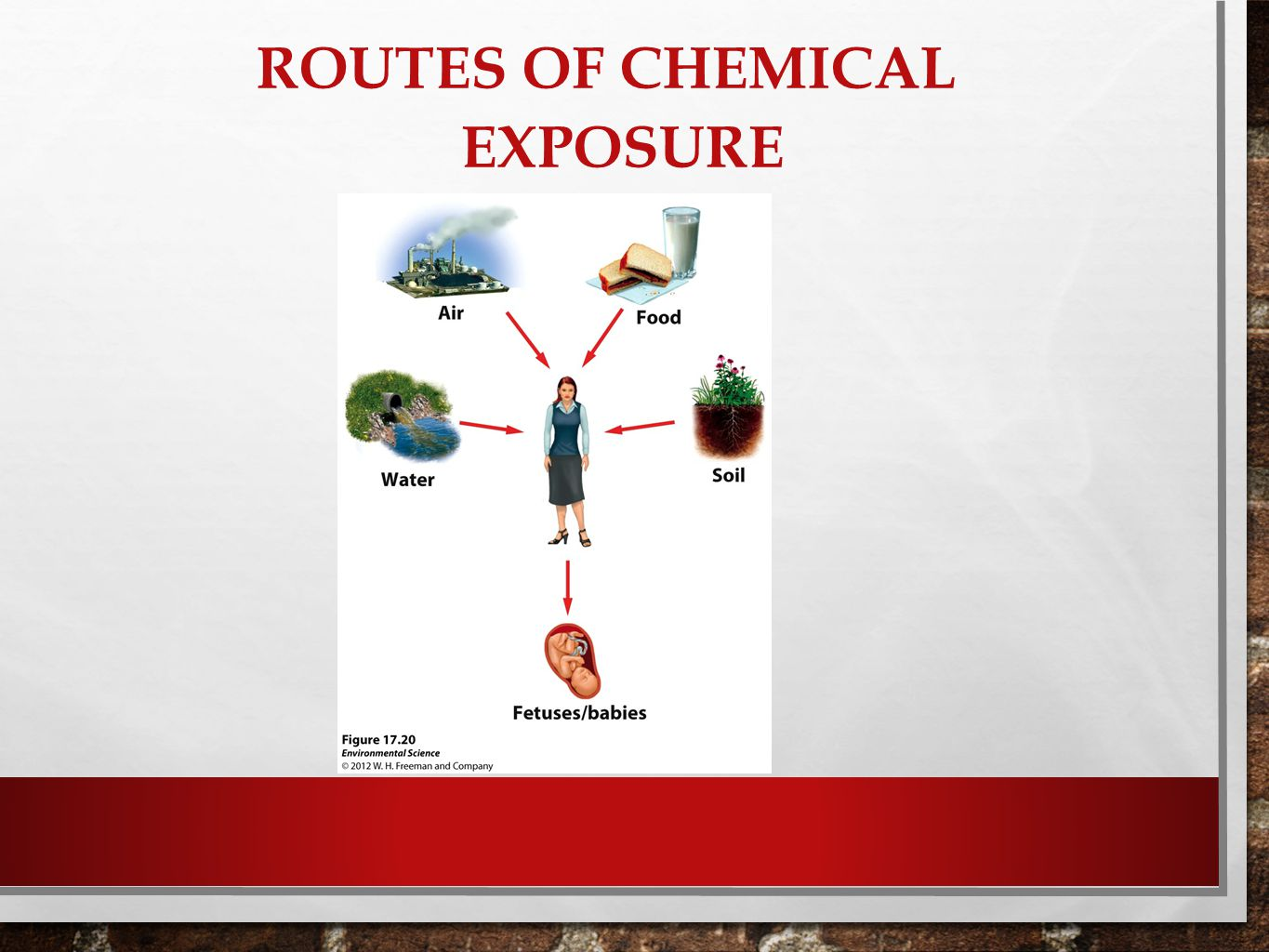 Routes of Chemical Exposure