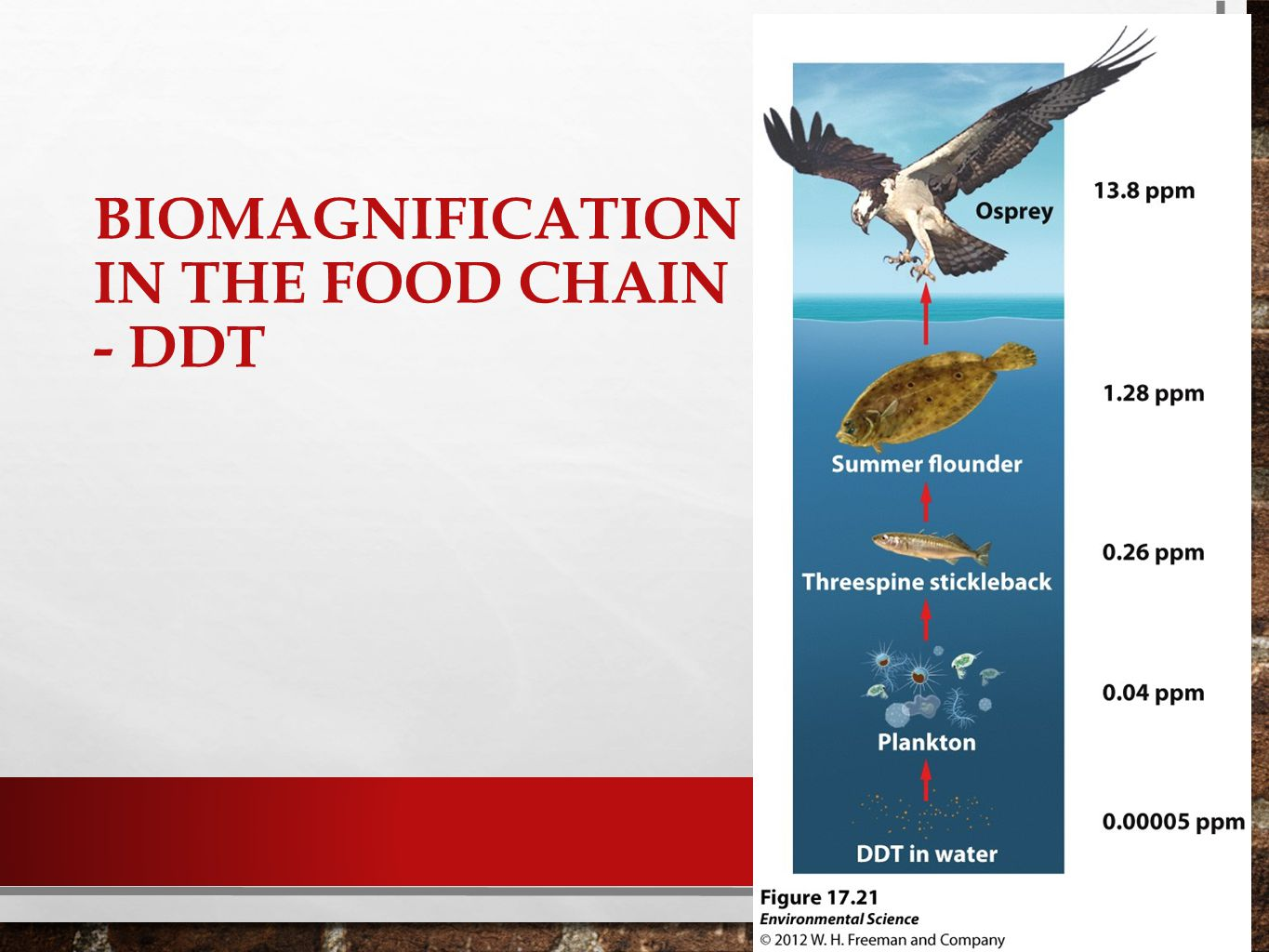 Biomagnification in the food chain - DDT