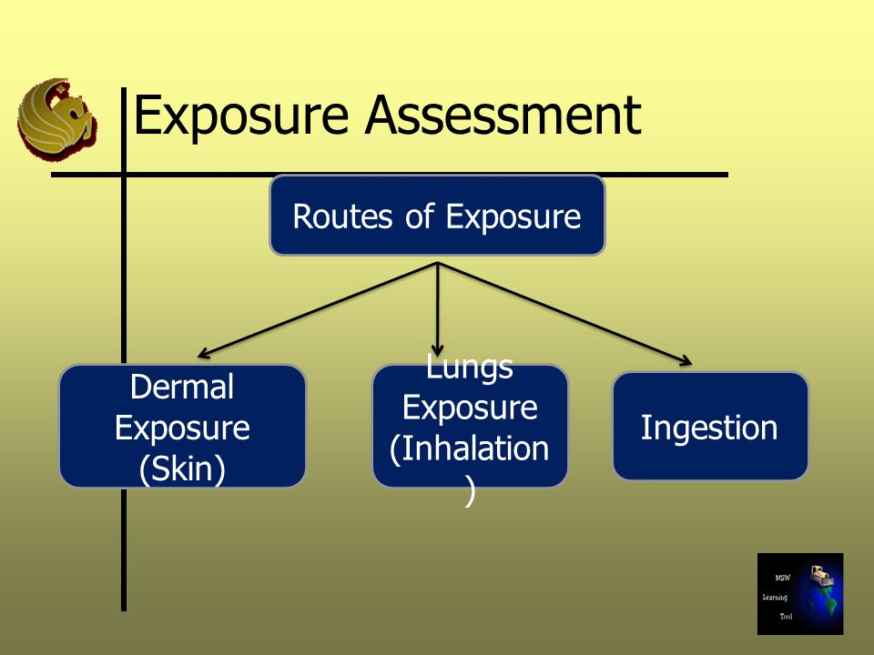 Exposure Assessment Routes of Exposure Lungs Exposure Dermal Exposure