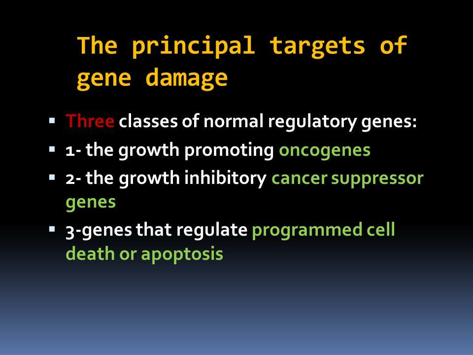 The principal targets of gene damage