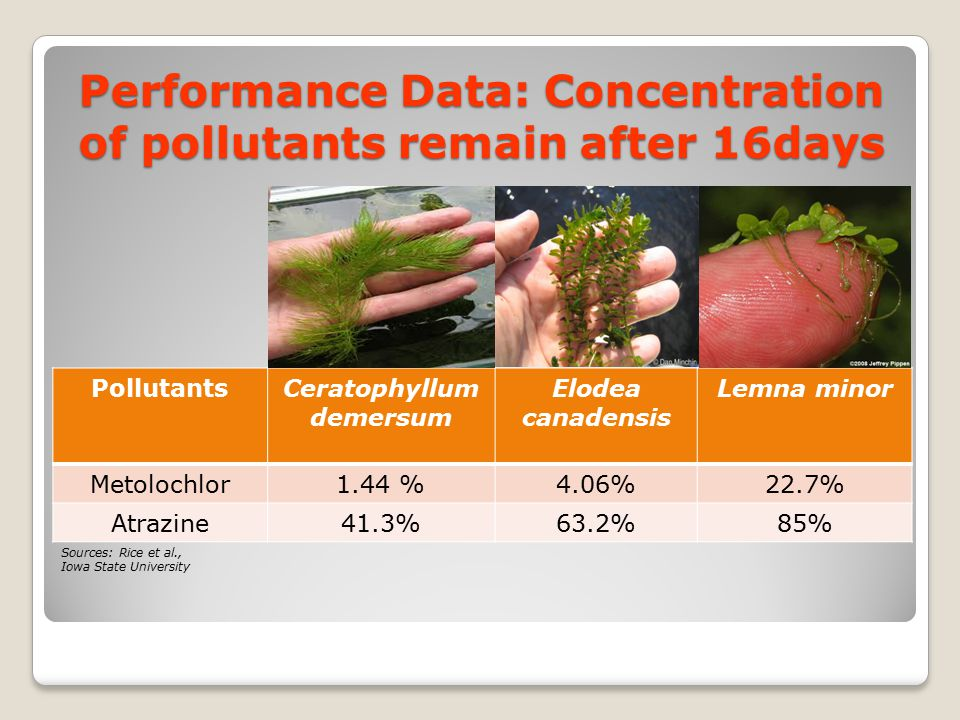 Performance Data: Concentration of pollutants remain after 16days
