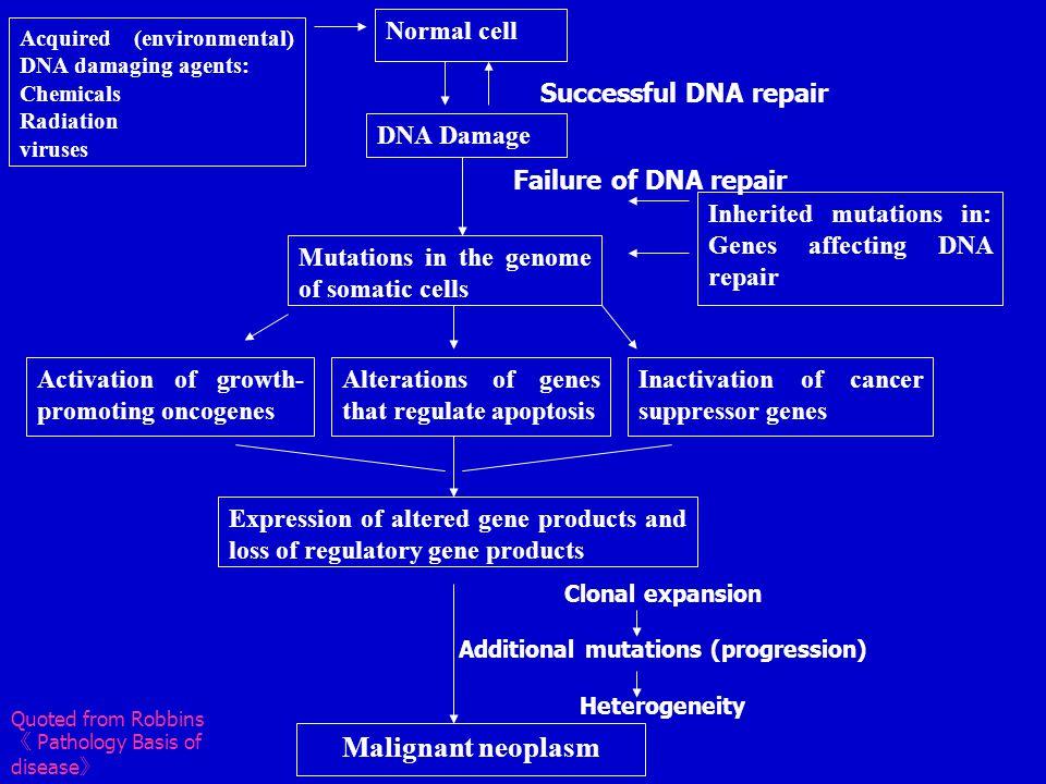 Additional mutations (progression)