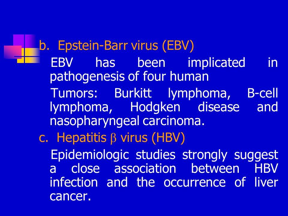 b. Epstein-Barr virus (EBV)