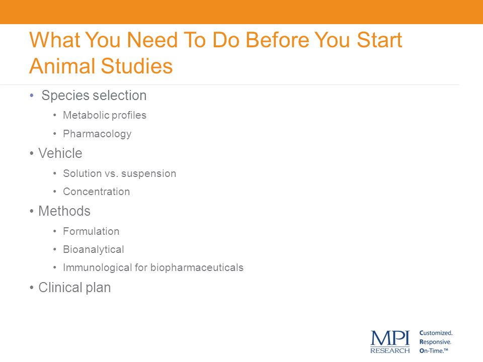 What You Need To Do Before You Start Animal Studies
