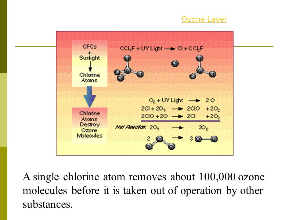 Ozone Layer A single chlorine atom removes about 100,000 ozone molecules before it is taken out of operation by other substances.